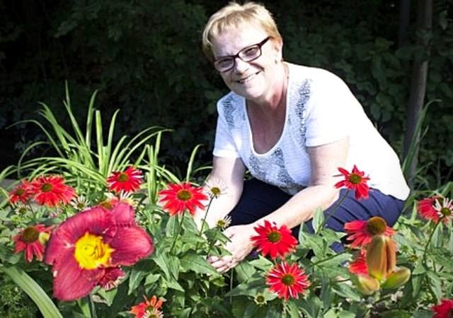 Magnifiques fleurs dans le jardin