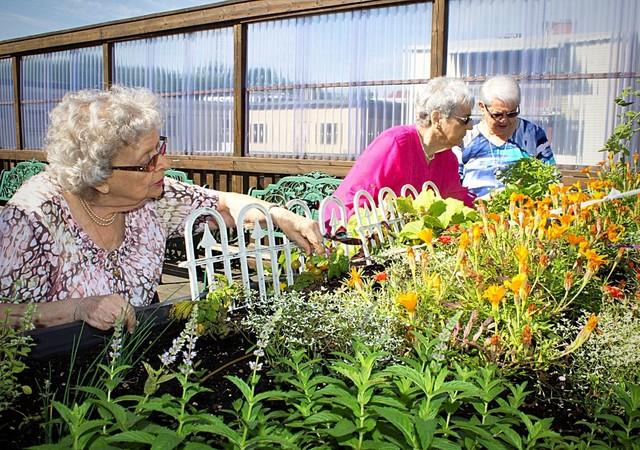 Jardin sur la terrasse